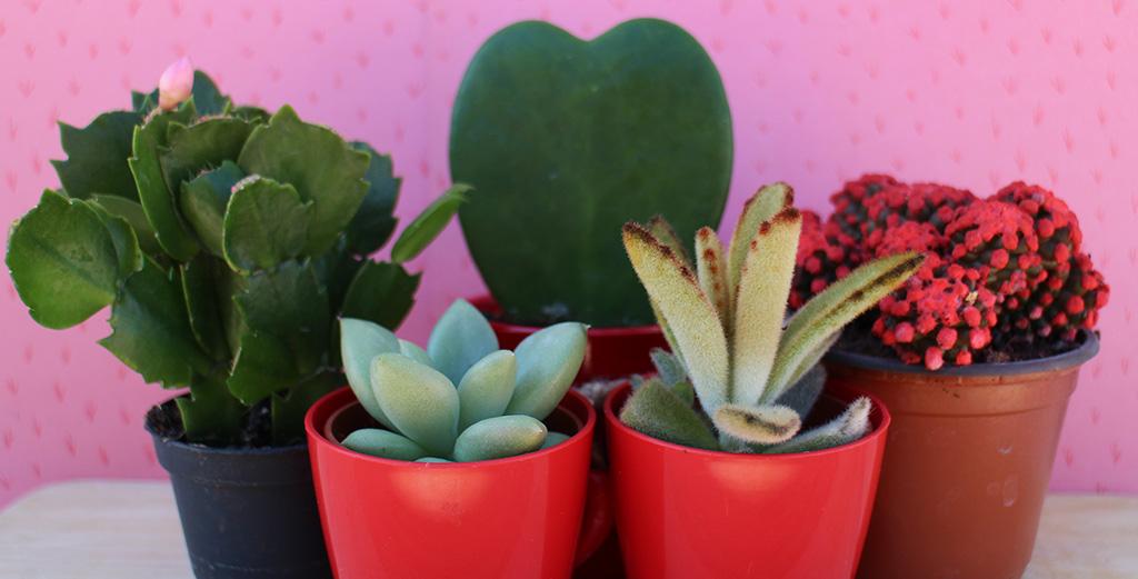 consejos cuidar cactus