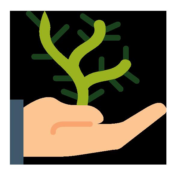 Plantas de colección