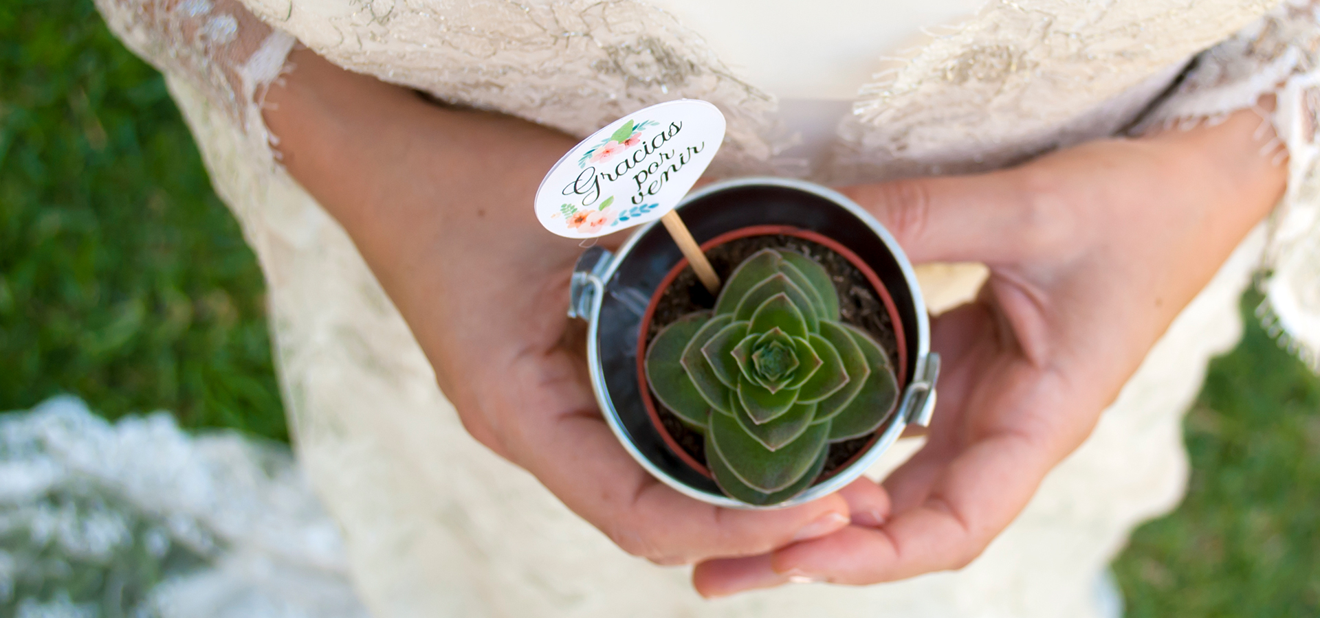 Cactus y Suculentas para Bodas. Sorprende a tus Invitados