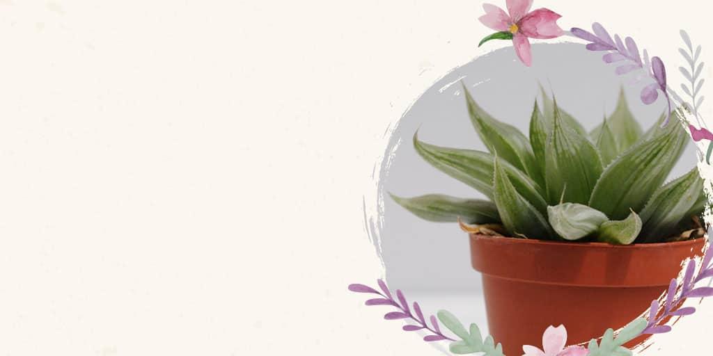 Encuentra tu cactus y suculenta en la tienda del cactus