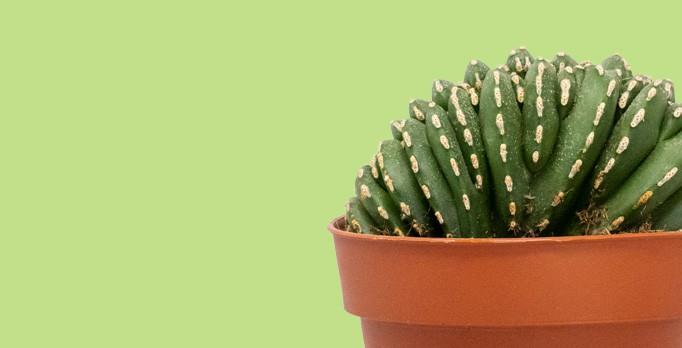 Comprar cactus de colección