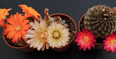 Decora con cactus con flor