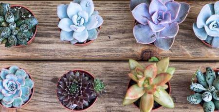 comprar cactus y suculentas online