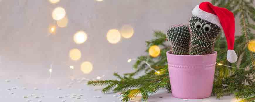 Comprar cactus online para decorar tu casa en navidad