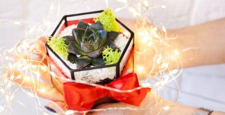 Comprar cactus para regalo ecológico original