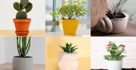 cubremacetas cactus