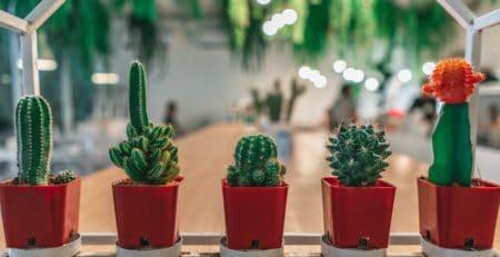 cuidados cactus terrario