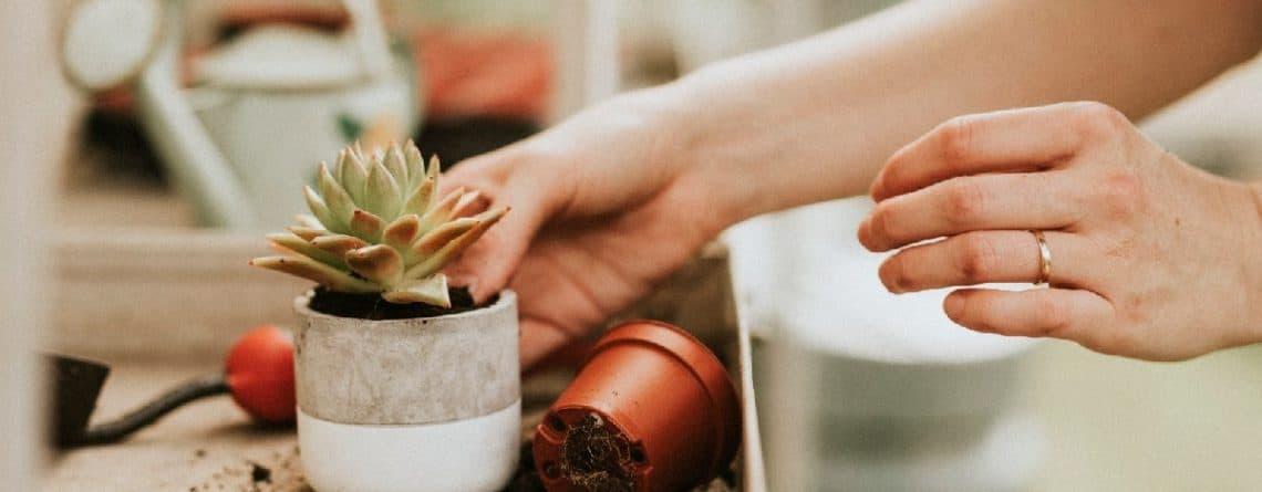 abono ecologico cactus