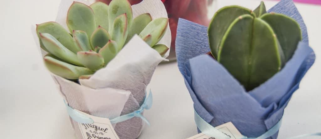 Regala cactus y suculentas en tu comunión