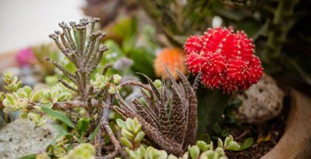mejores cactus bonitos
